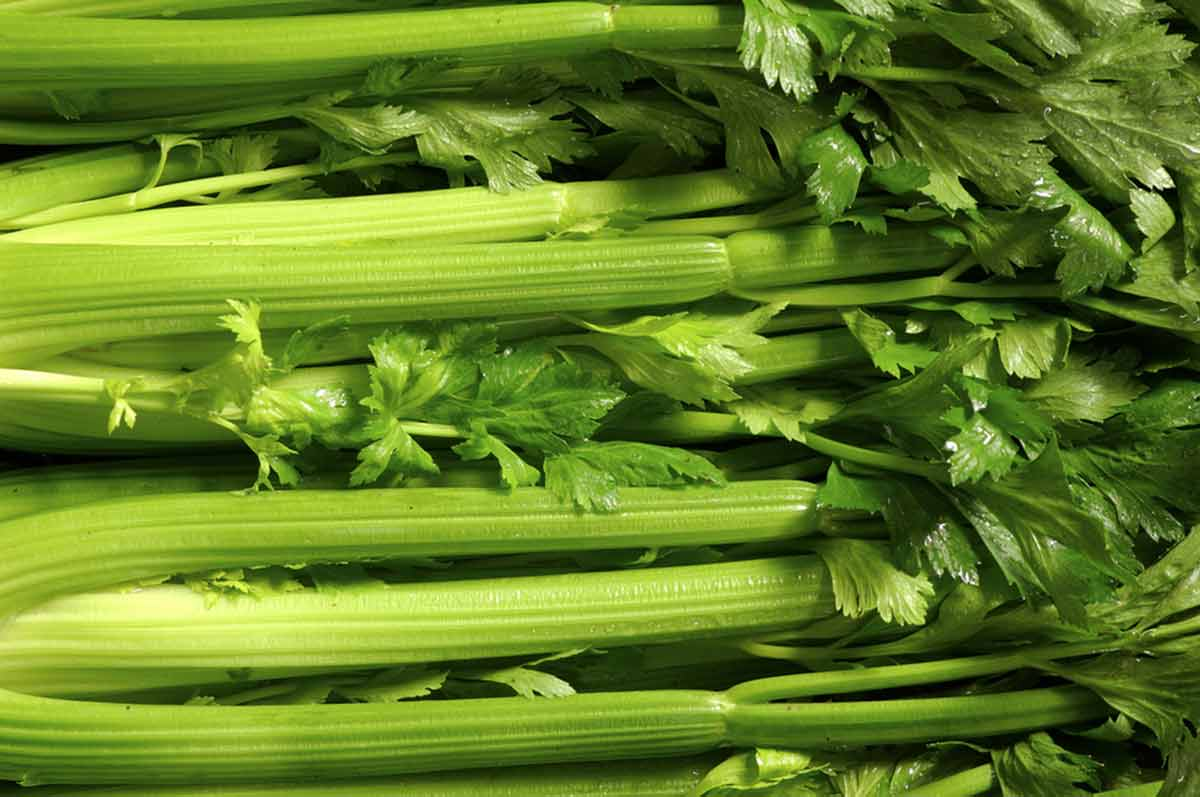 Celery food facts & health benefits - Laura's Idea